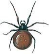 Fettedderkopp