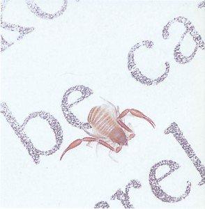 Bokskorpioner jager midd og støvlus