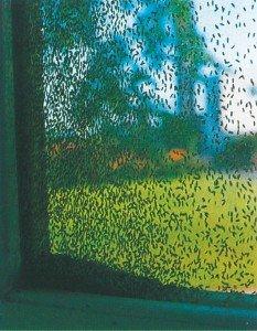 Gressfluer kan forekomme i store antall