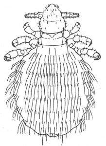 Kaninlus - Veggedyr Stikk og kloee - Side 163