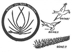Piggtråd til bekjempelse og vern mot duer