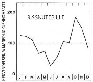 Sesong for rissnutebille - Skadedyr I Naeringsmidler - Side 101