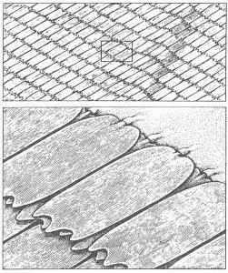 Sommerfuglstøv på vinger - Veggedyr Stikk og kloee - Side 54
