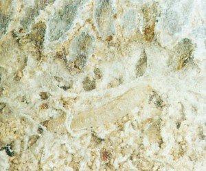 Spinnetråder fra melmøllarver