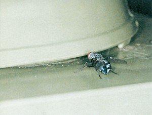 Spyflue i avfallsbeholder
