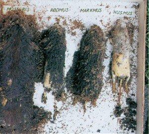 Utstoppede mus ødelagt av teppebillelarver - Skadedyr i hus og hytte - Side 108b