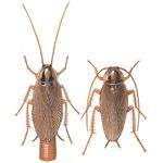 Tysk kakerlakk - Vanlige Skadedyr I Norge
