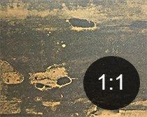 Borehull i tre fra bolverkbille - Skadedyr i hus og hytte - side 117