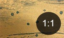Borehull i tre fra boresnutebille - Skadedyr i hus og hytte - side 115