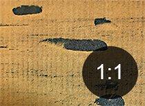 Borehull i tre fra brun stubbebukk - Skadedyr i hus og hytte - side 119