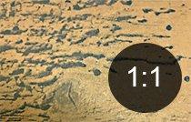 Borehull i tre fra eikeborebille - Skadedyr i hus og hytte - side 115