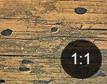 Borehull i tre fra husbukk - Skadedyr i hus og hytte - side 118