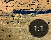 Borehull i tre fra myk borebille - Skadedyr i hus og hytte - side 114