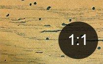 Borehull i tre fra splintvedbille - Skadedyr i hus og hytte - side 114