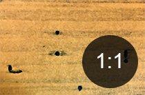 Borehull i tre fra stripet vedborer - Skadedyr i hus og hytte - side 116