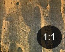 Borehull i tre fra svart jordmaur - Skadedyr i hus og hytte - side 120