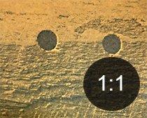 Borehull i tre fra treveps - Skadedyr i hus og hytte - side 117