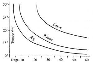 Utviklingstider for kornsnutebillens egg - Skadedyr I Naeringsmidler - Side 37